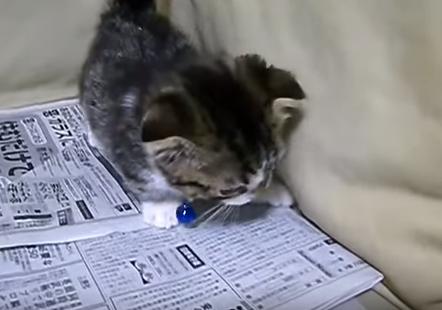 暴れる 子猫