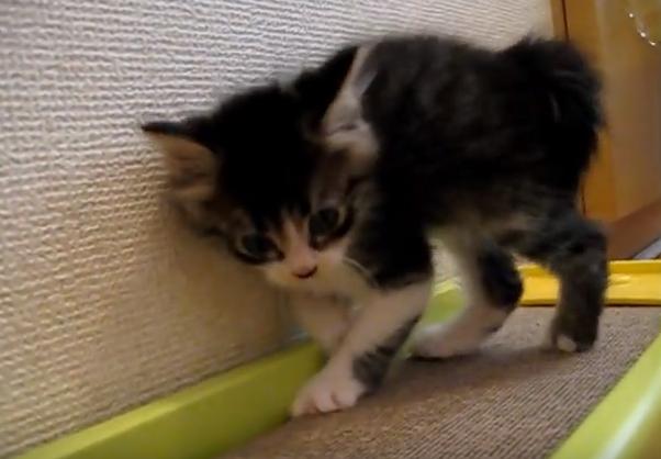 体重 増え ない 子猫