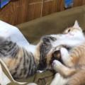 子猫が毎日のように取っ組み合って喧嘩をする理由。止めるポイントは?