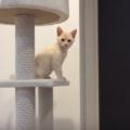子猫にキャットタワーは生後5週目から遊ばせよう。早めに遊ばせたほうがいい理由とおすすめまで