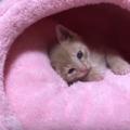 子猫を留守番させておける月齢ごとの時間。1泊できるのは生後4か月から
