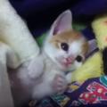 子猫がゴロゴロと喉を鳴らす気持ち。鳴らないのはどうして?