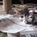いつまで続くの?暴れる子猫の勢いがすごい!落ち着かせる方法