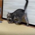 子猫が走り回るのはなぜ?理由と落ち着かせる方法