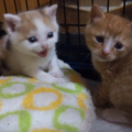 二ヶ月生後二ヵ月の子猫はなにができる?体重や成長記録まとめ