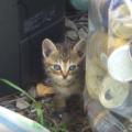 子猫を拾いたいならここに行こう!捨て猫がよくいる場所のポイント