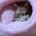 子猫に最適な室温。気を付けたい夏と冬の暑さ、寒さ対策!