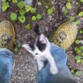 子猫が欲しい人必見!無料で子猫を引き取る方法