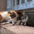 保護するとき必見!すばしっこい子猫の捕まえ方