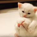 子猫の性格が決まる8つの要因。人なつっこい猫になるには?